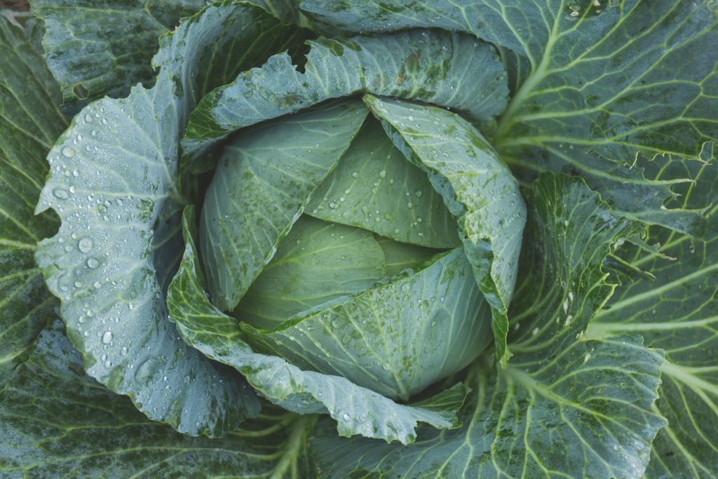 Keto rice substitutes - cabbage